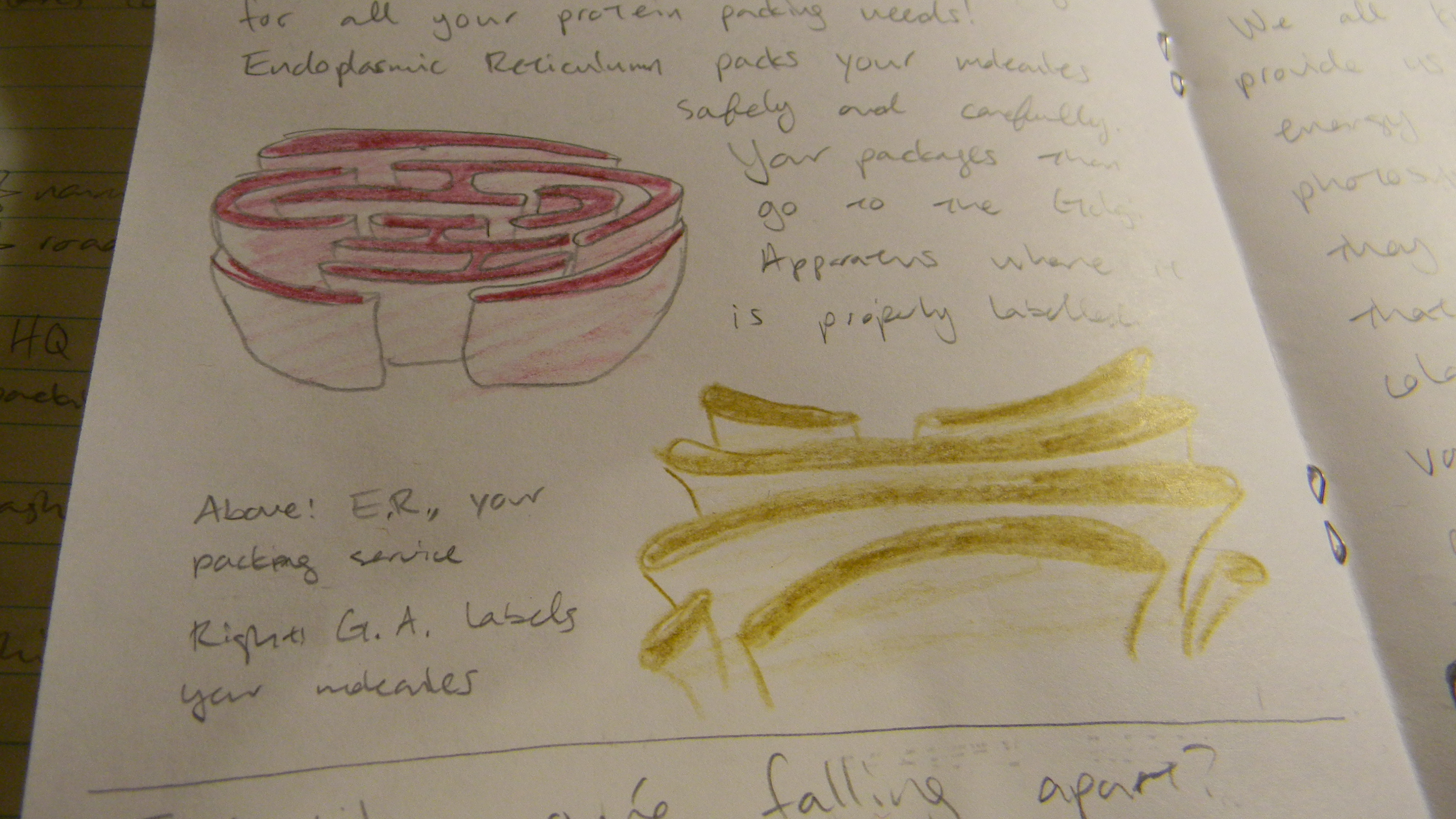 February   2012   I'll Stand   Page 2 in Endoplasmic Reticulum Drawing
