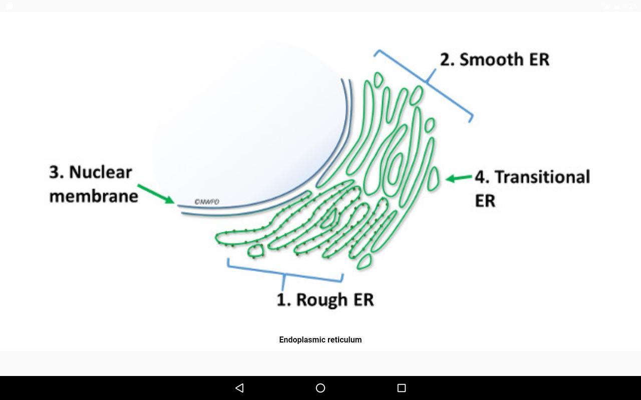 Cell Biology-101 Для Андроид - Скачать Apk within Er Diagram 101