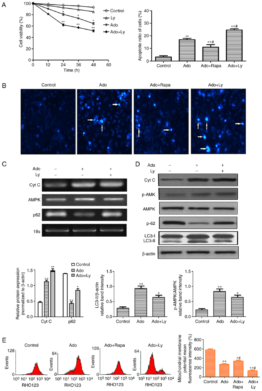 Inhibition Of Autophagy Enhances Er Stress-Mediated pertaining to Er Diagram 101