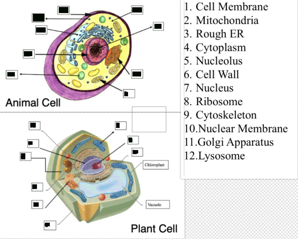 Cell Study Guide Diagram   Quizlet throughout Er Diagram Quizlet
